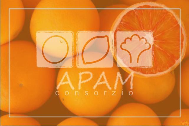 Arance Siciliane Bio