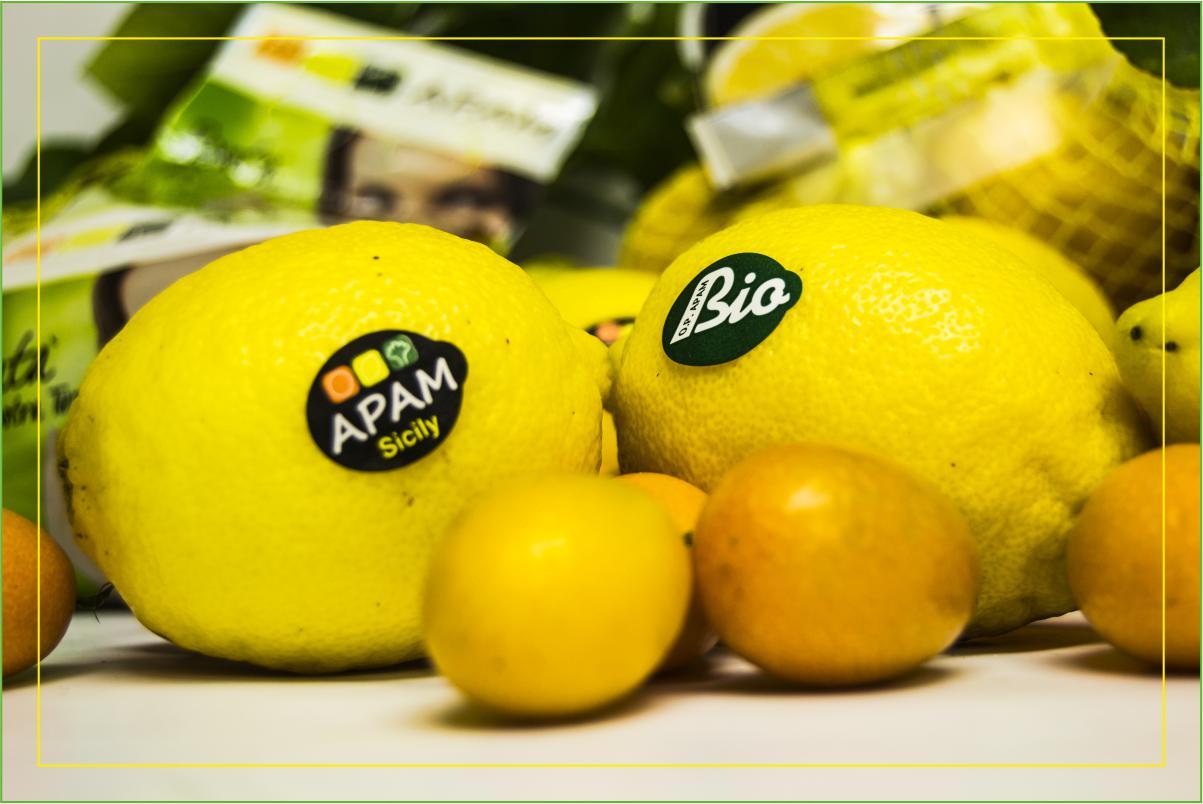 Consorzio Apam Torrenova - Limoni kumquat