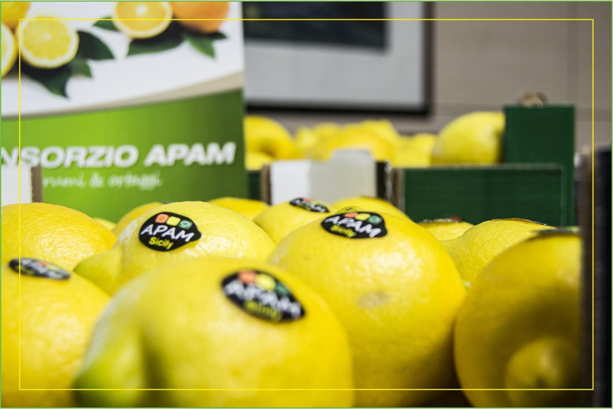 Consorzio Apam Torrenova - Limoni Siciliani