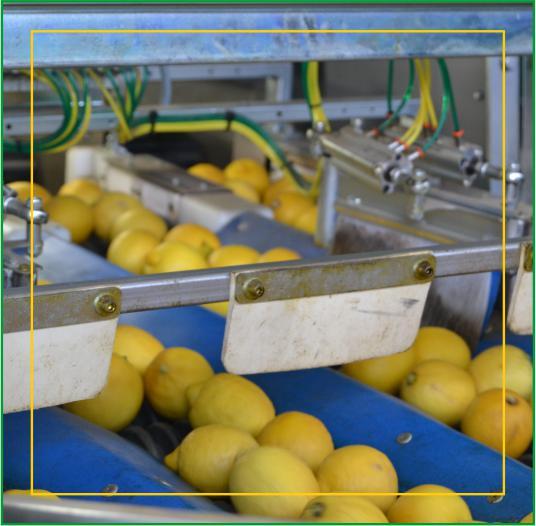 Consorzio Apam Torrenova - Spazzolatura Limoni Siciliani