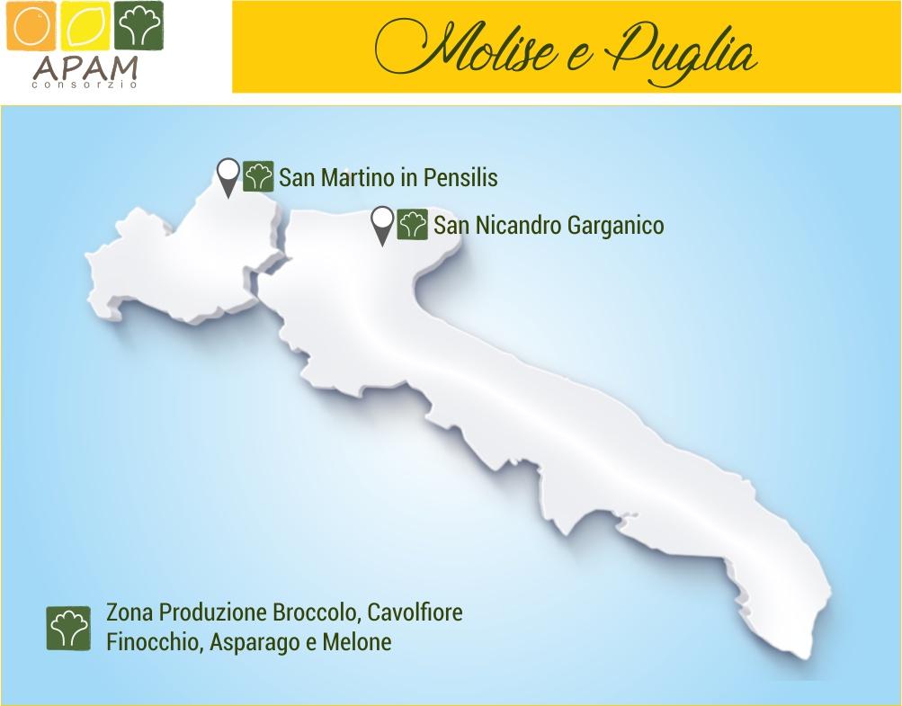 Consorzio Apam Torrenova - Zone di produzione Ortaggi in Molise e Puglia
